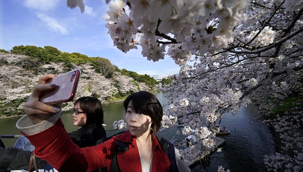 В Японии на полгода раньше срока зацвела сакура