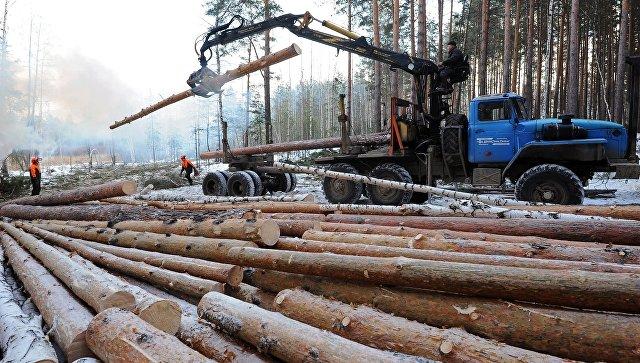 Заготовка древесины в Челябинской области