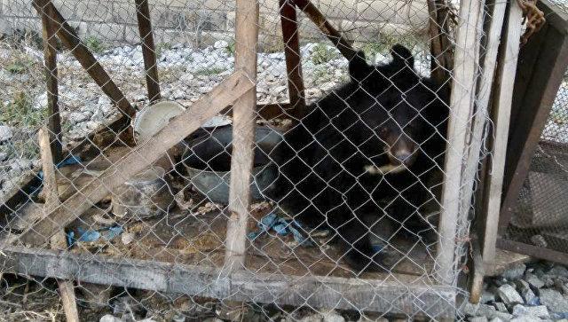 Гималайский медвежонок, изъятый департаментом охотнадзора Приморья у местных жителей. 8 ноября 2018