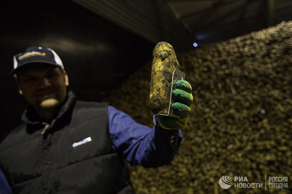 Картофель фри стал российским