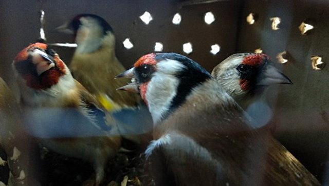Брянские таможенники нашли почти сто редких птиц в багаже молдаванина