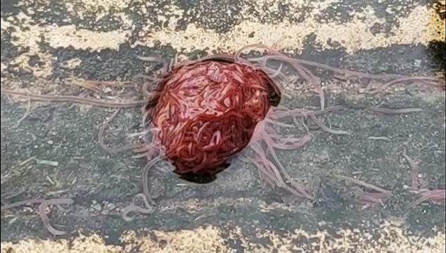 Канализационный монстр из червяков
