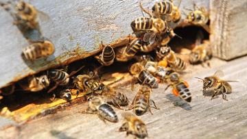 Пчелы. Архив