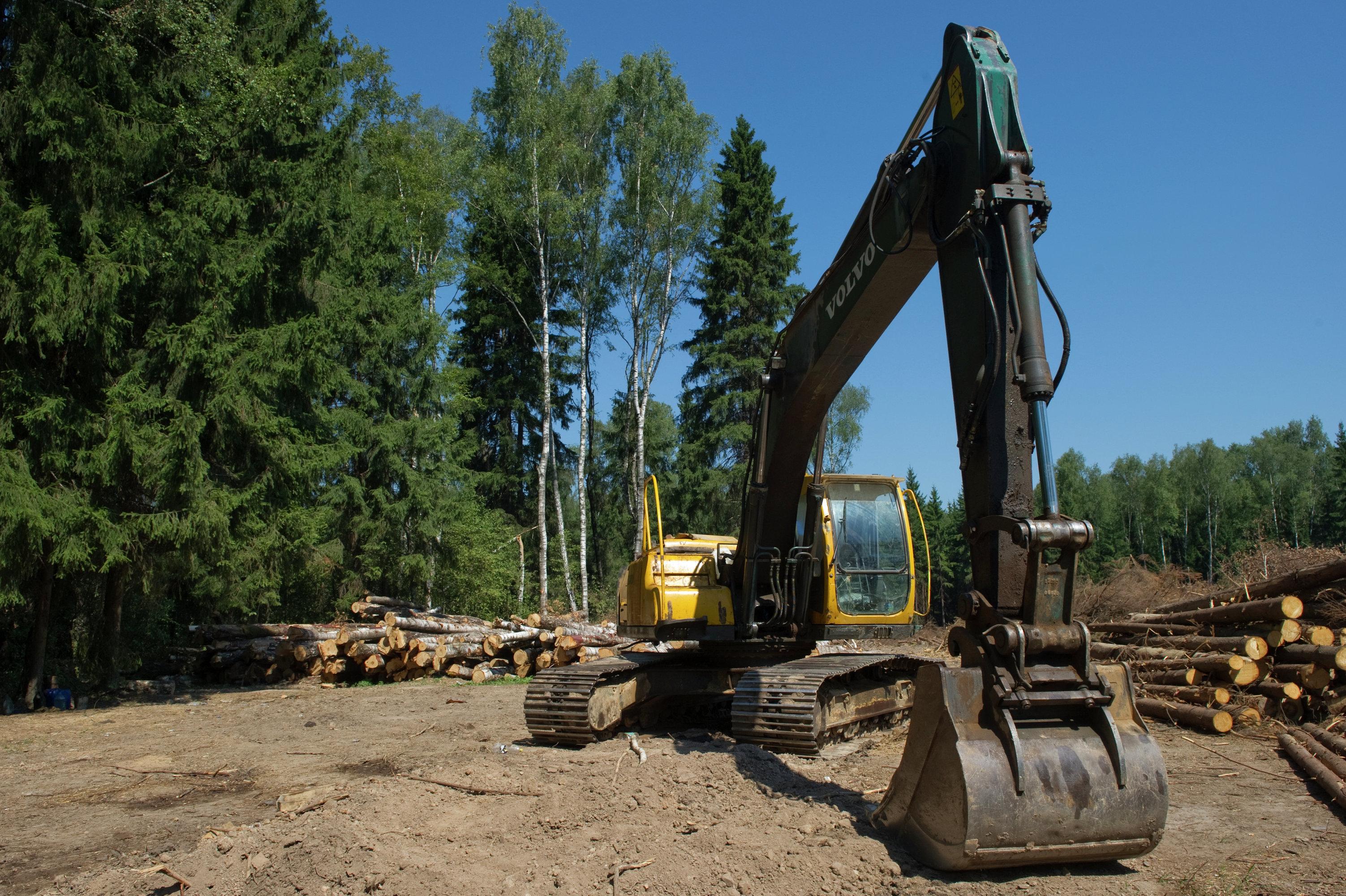 Вырубка Химкинского леса