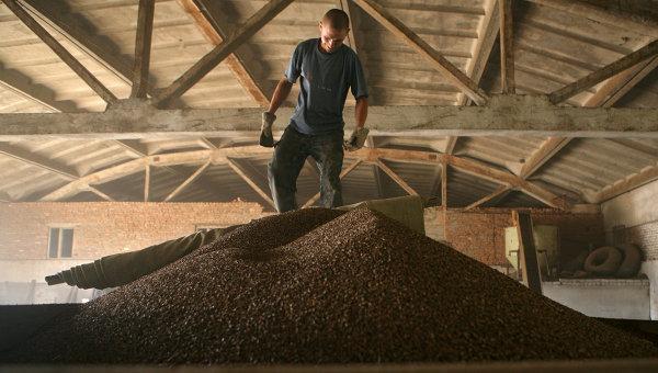 Уборка урожая гречихи в Алтайском крае. Архивное фото