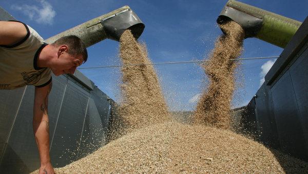 Ресурсы зерна после сбора урожая составят 90 млн т - Минсельхоз