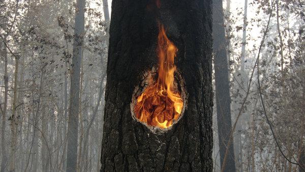 Лесные пожары в Тольятти. Архив