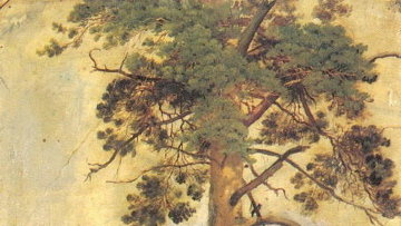 Иван Шишкин. Этюд Сосна на скале. Картон, масло. 1855 год