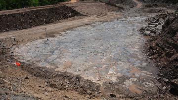Раскопки в ископаемом лесу в окрестностях города Гильбоа