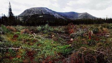 Вырубка леса под строительство рудника в Мурманской области. Архив