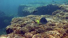 Коралловый риф в водах Тихого океана