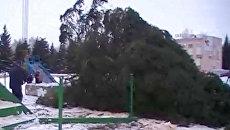 Новогодняя ель рухнула на центральной площади города Отрадный
