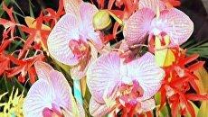 Цветоводы привезли тысячу редких орхидей на выставку в Каракасе