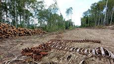 Строительство платной автодороги через Химкинский лес. Архив