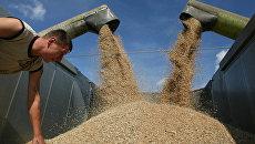 Уборка пшеницы на полях сельхозпредприятия Долгов и компания