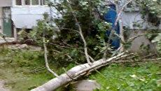 Ураган в  Пскове