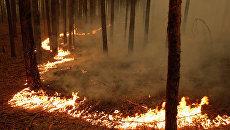 Природный пожар. Архив.