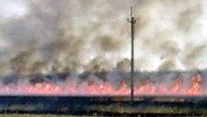Огонь за сутки уничтожил 130 га пшеницы в Центральной России