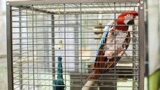 Попугай. Архивное фото