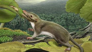 Фоторобот предполагаемого предка всех плацентарных млекопитающих, существующих сегодня на Земле