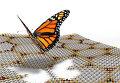 """Бабочка-монарх на фоне листов графена и нитрида бора, в которых живет ее квантовая """"кузина"""""""