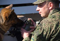 Яркое шоу служебных собак во Владивостоке