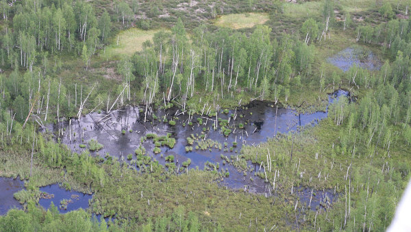 Тайга в районе падения Тунгусского метеорита. Архив