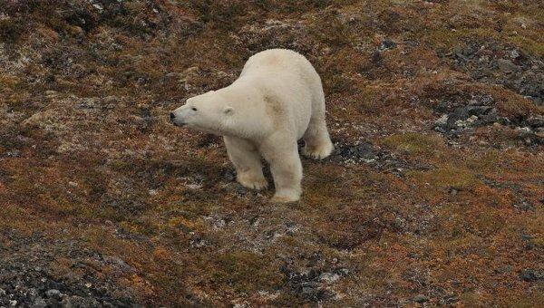 Ученые провели авиационное обследование 400-километрового западного участка арктического побережья Чукотки