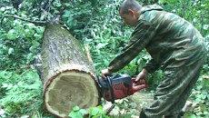 День работников леса – грустный праздник в Приморье