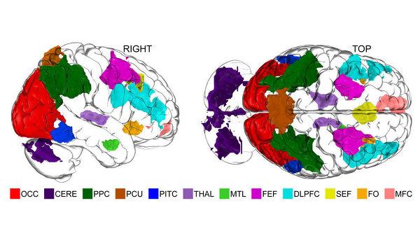 Карта регионов мозга, в которых расположены части центра воображения