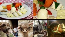 Экзотические животные и итальянские сыры - особенности агротуризма в России