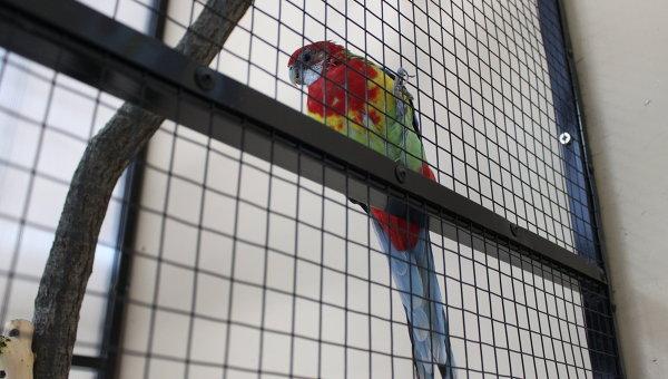 Кубанский пенсионер заявил, что к марихуане его пристрастил попугай