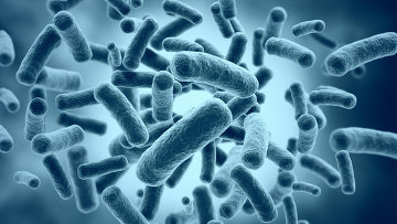 Бактерии, архивное фото