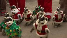 Пингвины в костюмах Санты и елочки прогулялись по парку в Южной Корее