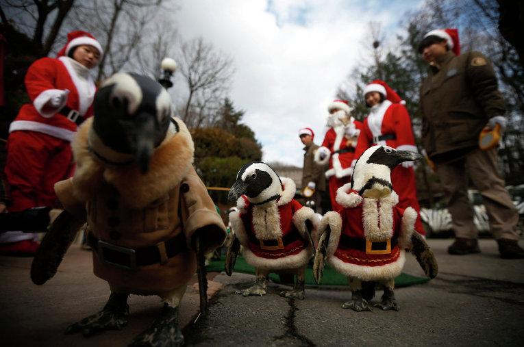 Пингвины в костюмах Санта-Клауса