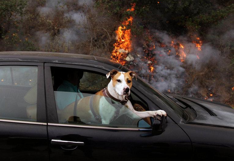 Собака на пассажирском сидении в автомобиле
