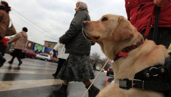 Собака-поводырь. Архивное фото