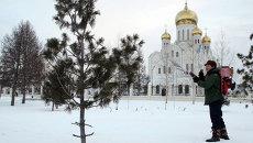 Антивандальная обработка елей в парках Новосибирска