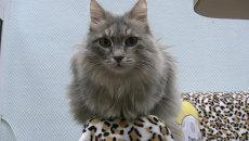 Кошки в тренде: 2 месяца работы котокафе в Красноярске