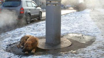 Бродячие собаки греются в морозную погоду. Архивное фото