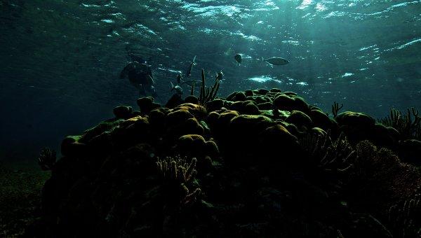 Подводный мир. Архивное фото