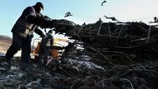 Переработка новогодних елок на ТБО во Владивостоке. Фото с места событий