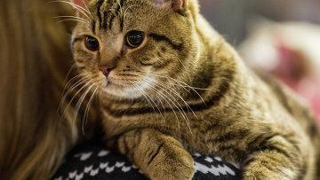 аллергия на эпителий кошки что делать