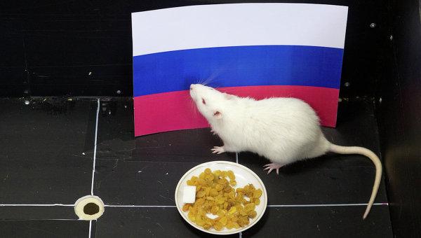 Крыса Шурик предсказывает исход хоккейного матча Россия - Словения на Олимпийских играх в Сочи. Фото с места события