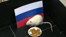 Крыса-патриот: как томский Шурик нагадал победу российским хоккеистам