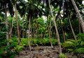 Джунгли Полинезии