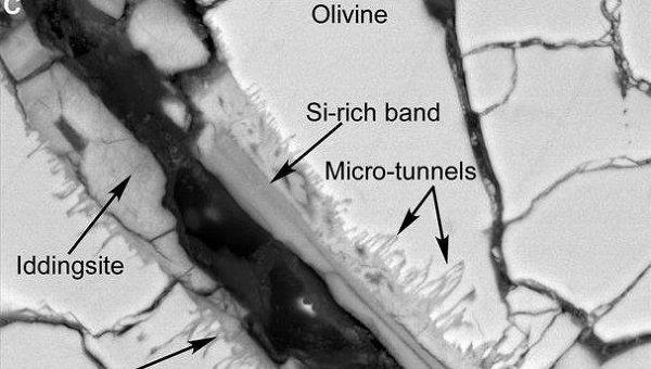 Сканирующая электронная микроскопия показала туннели и микротуннели в метеорите с Марса