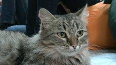 Доктор с хвостом: томские эксперты рассказали, от чего лечат кошки
