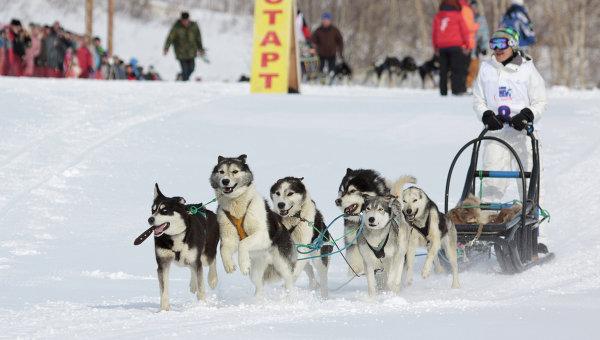 Гонки на собачьих упряжках Берингия на Камчатке, архивное фото