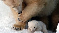Новосибирский белый медвежонок вышел на прогулку: первая фотосессия
